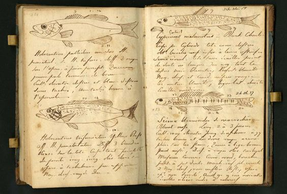 Lewis and Clark journal drawings   Lewis & Clark Journal ...