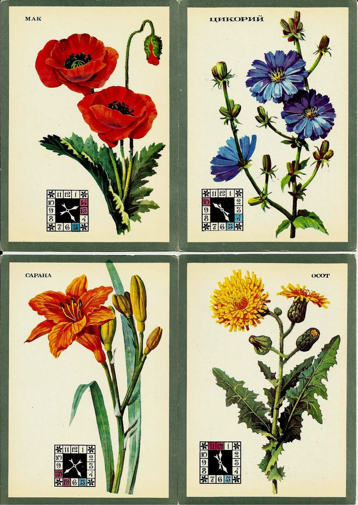 Flowers - clock live - sundial - Postcards Vintage Russian - set of 15 unused by LucyMarket on Etsy