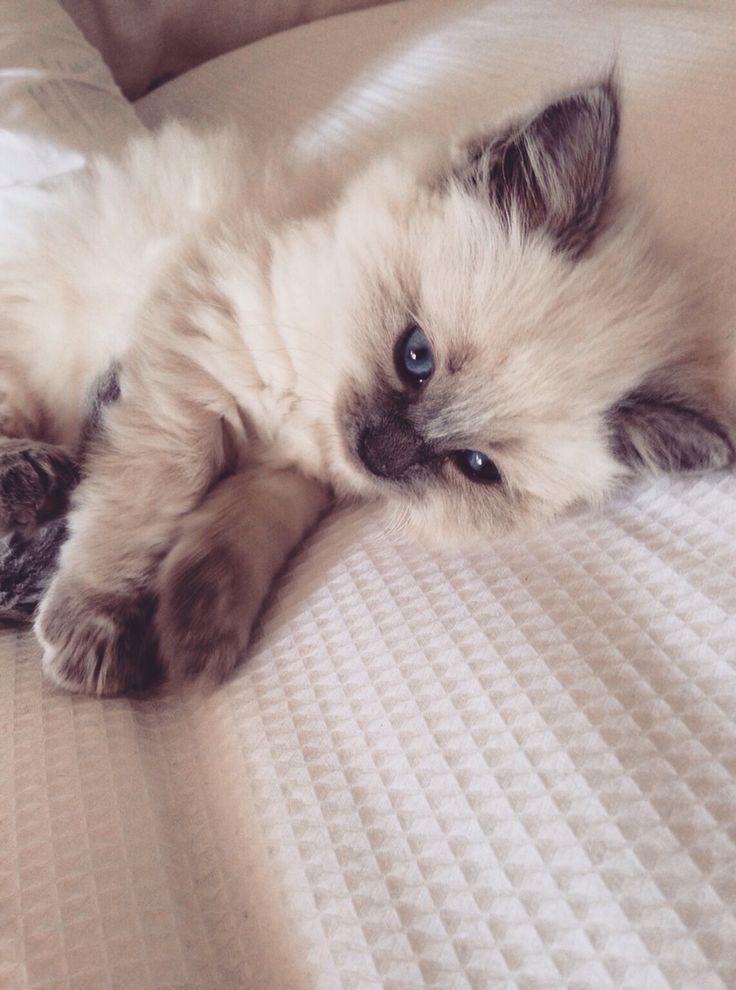 Kitty Love :: Funny Cutest + Most Adorable :: Free your Wild :: Ver más Gatitos …
