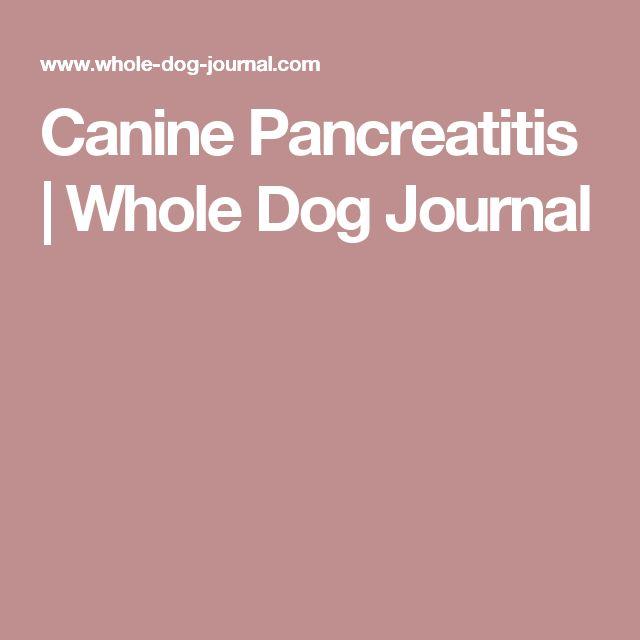 Canine Pancreatitis | Whole Dog Journal