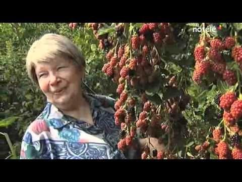 Belgique : 1800 m² de forêt où tout est comestible!
