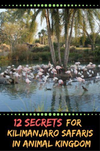 12 Secrets for Kilimanjaro Safaris in Animal Kingdom