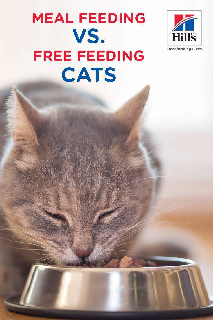 3 Cat Feeding Methods Pros And Cons Of Each Cat Feeding Cat Care Feeding Kittens