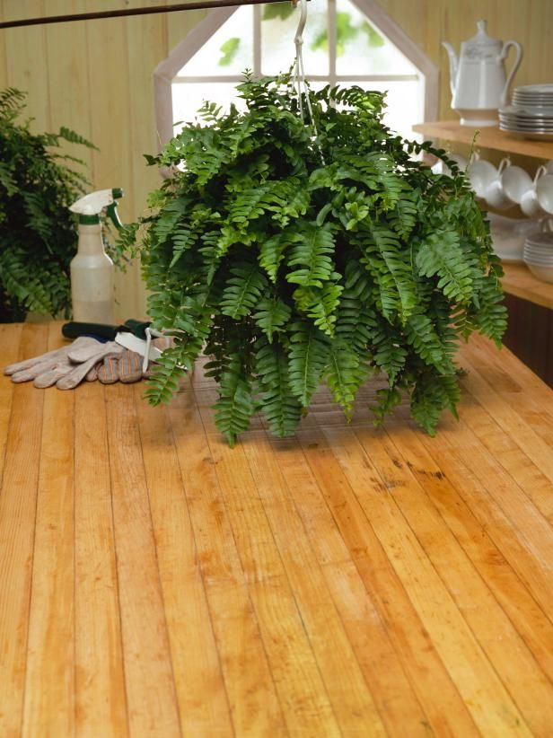 HGTV.com shares simple techniques for taking care of indoor ferns.