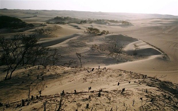 Botanists launch bid to rescue the world's threatened habitats: Among the landscapes they are hoping to save are the arid huarango woodlands in southern Peru, which have almost completely been turned to desert after being cut down to make way for farming