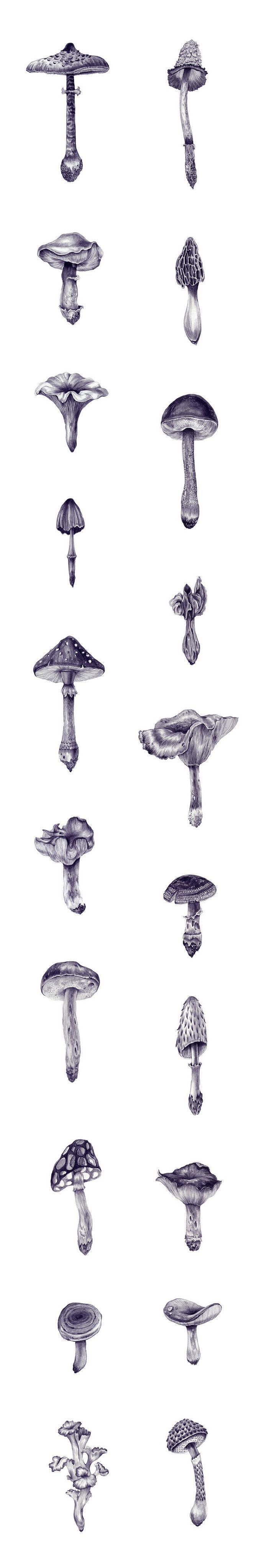 Mushroom explosion - Ei Ka