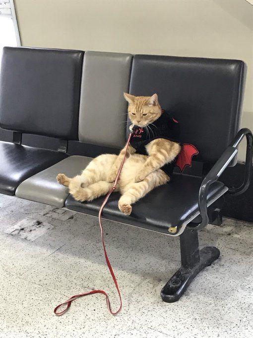 兄から送られてきた「駅で座ってるおっさん」の写真が可愛すぎると話題に!思わずおなか触りたくなるレベル - Togetterまとめ