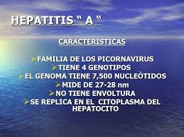 Resultado de imagen para power point cadena epidemiologica de hepatitis