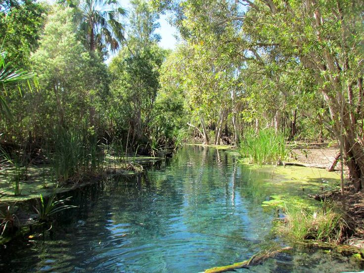 Thermal pool at Bitter Springs, Mataranka, Northern Territory AU (Top End) ~ Michele Gillette ~ fabulous warm waters