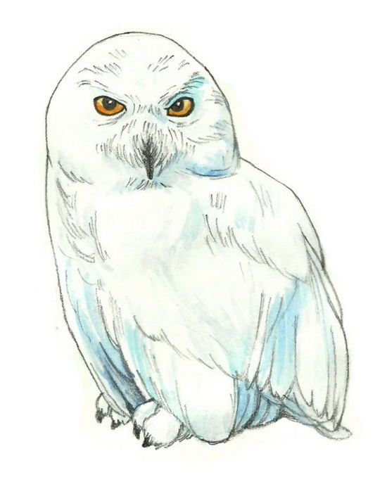 How To Draw Hedwig From Harry Potter 6 Steps (with Pictures) | Harry Potter | Pinterest | How ...