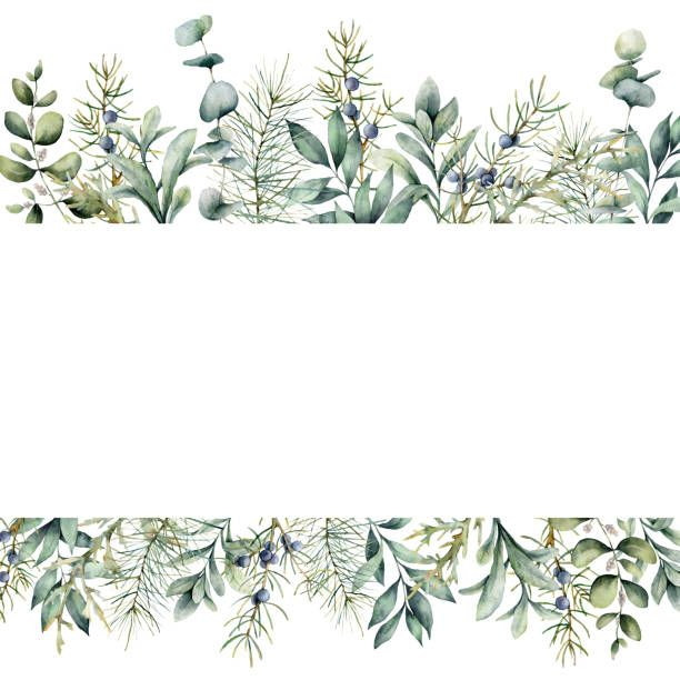 Best Eucalyptus Watercolor Illustrations Royalty Free Vector Graphics Clip Art Watercolour Texture Background Floral Border Design Phone Wallpaper Patterns