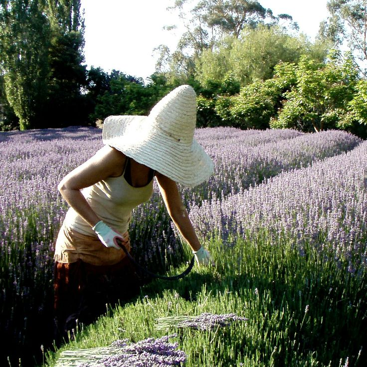 Lavendula Farm is in Shepherds Flat, which is a short drive from Hepburn Springs, Victoria, Australia. The original buildings were built in the 1860s by the swiss-italian migrants so the history of Lavandula is really interesting and well worth a visit to discover more.