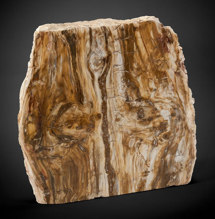 166 Best Images About Petrified Wood On Pinterest