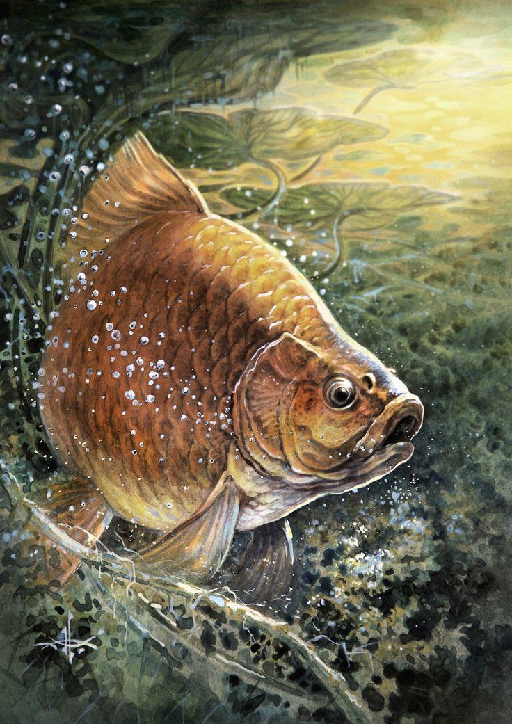 картинки рыба художника насквозь, все еще