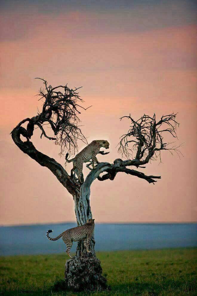 Pin de Suerlamarah Gadelha em ANIMAIS FOFOS | Animais da natureza, Animais silvestres, Belas criaturas
