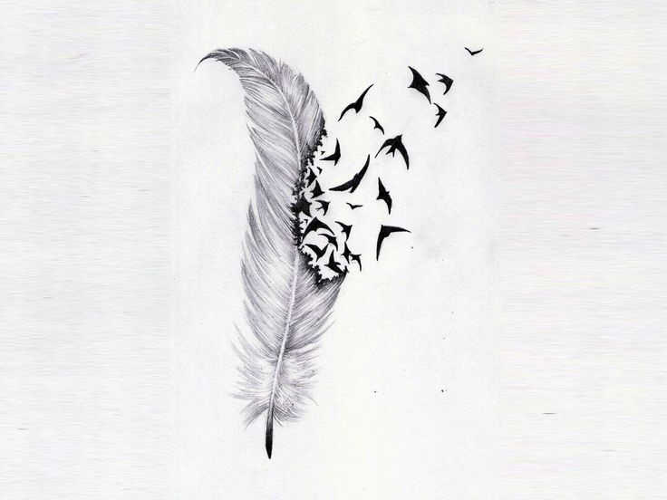 free designs feather and birds flock wallpaper 1280x960 ... Bird Feathers Drawing