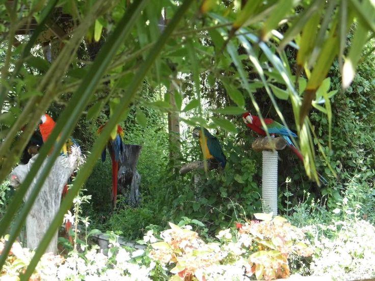 Zoo de La Flèche: les perroquets