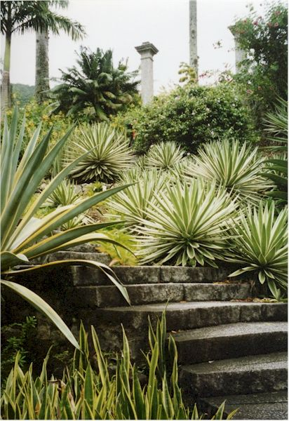 Bold architectural plants. For front garden and/or as accents in bsck