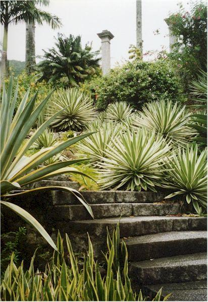 474 best JARDIN images on Pinterest Gardens, Landscaping and Gardening