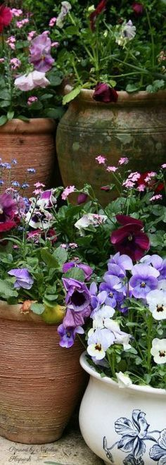Pansies and other spring flowers in pots