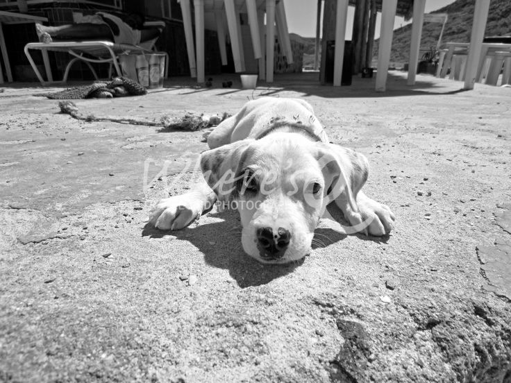"""Puppy de Tecolote"" ~ Playa el Tecolote, La Paz, Baja, Mexico.  The sun crushed down on the nearly-abandoned beach outside of La Paz, but I found friends; seagulls, a pack of wild dogs, and hermit crabs. Then I found him...a rascally white puppy howling on the concrete patio of a closed-up beach bar. He was nearly wild with sharp little puppy teeth and weathered rope around his neck as a makeshift leash. His owner snored in the background, passed out on a plastic lounger."
