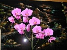 Où placer votre orchidée comment lui donner les meilleures conditions