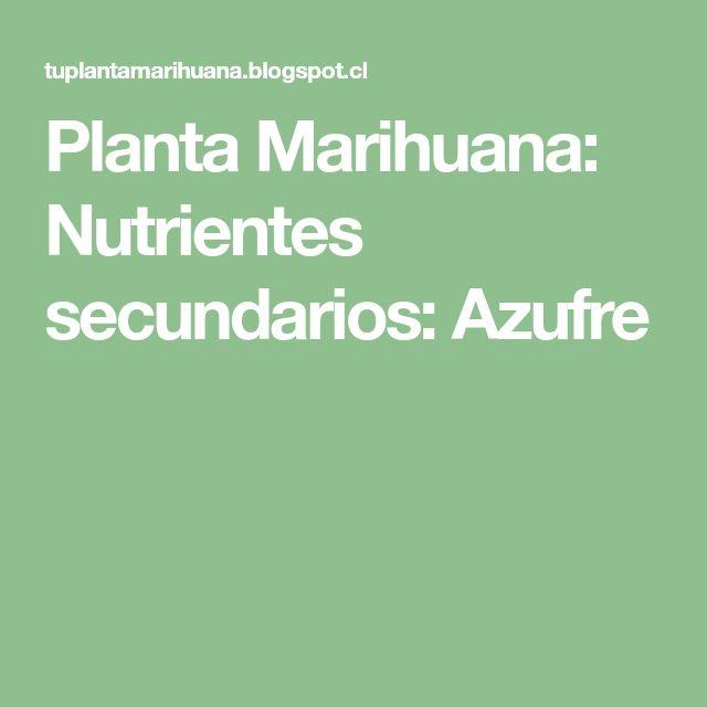 Planta Marihuana: Nutrientes secundarios: Azufre