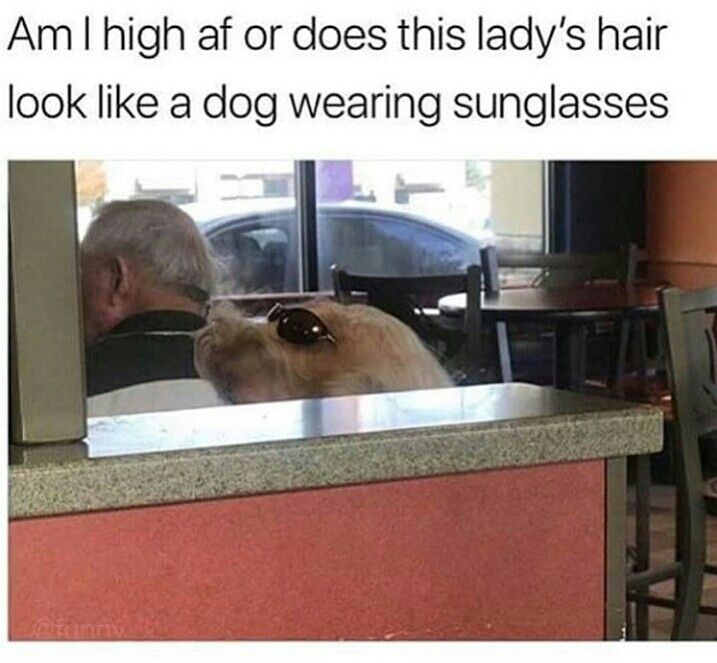 @badgalronnie.  The hair definitely looks like a dog. Toss is the second time I've seen the picture and the seconds time I have wondered why a dog is just chilling in a restaurant