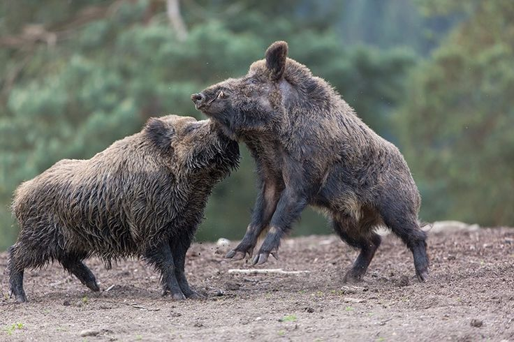 Fight club by Peter Weimann on 500px