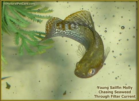 ... freshwater fish and fish tanks on Pinterest Shrimp, Plants and Fish