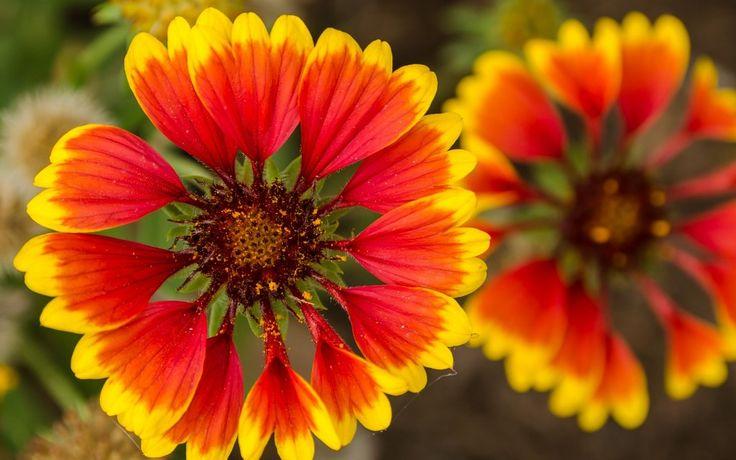 Gentle Simple Colorful Flowers