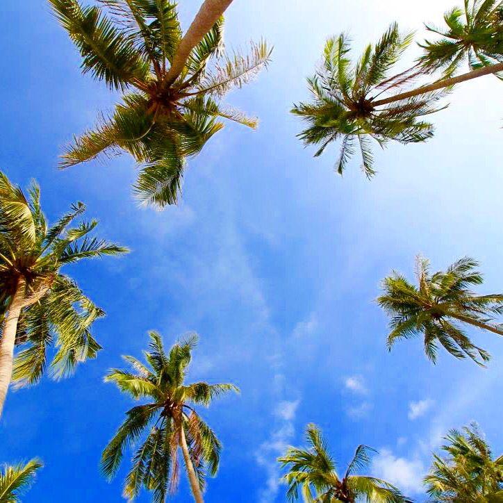 Take me back!!  #travel #thailand #asia #explore #adventure #paradise #coconuts #beach #beautiful