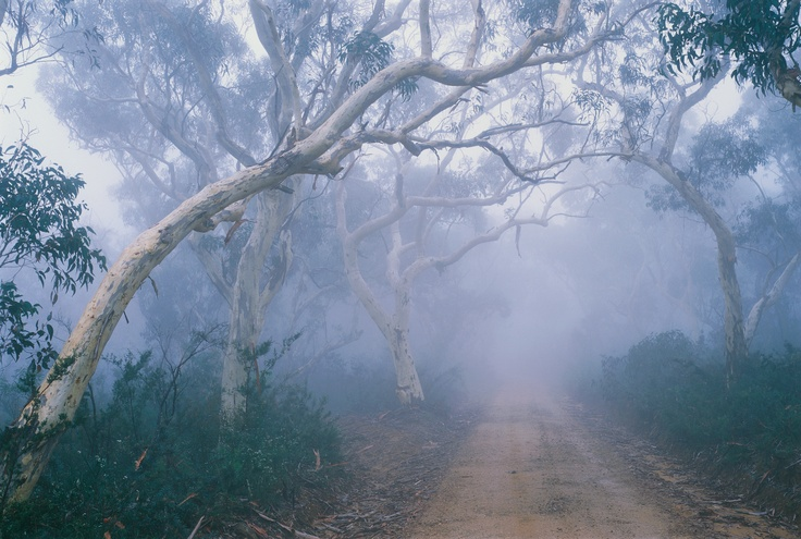 Morning fog, Mount Hay Road, Leura, Blue Mountains, NSW  from: http://www.leurabluemountainsguide.com/blog/wordpress/?tag=leura