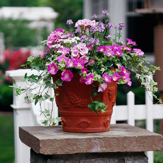 Potted Garden Flowers 5342 best planters | garden pots images on pinterest | flowers