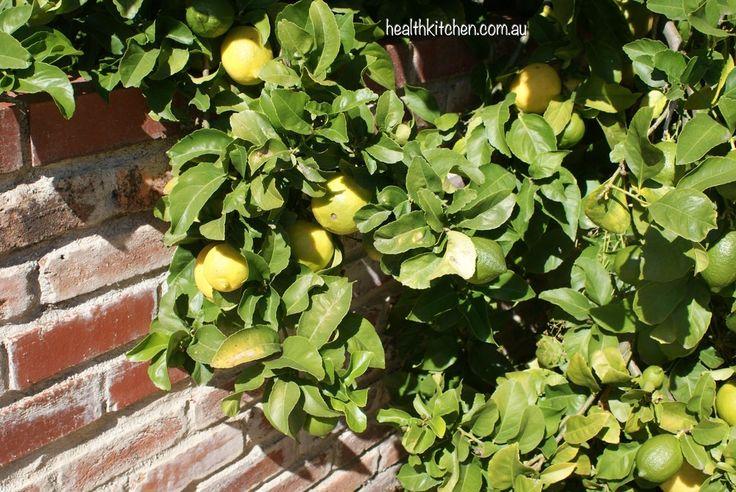 Grow Organic Vegetables — Health Kitchen
