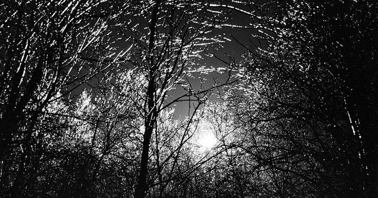 Los 10 bosques más tenebrosos. Desde los cuentos de la infancia, adentrarse en el bosque se asoció a lo desconocido: perderse entre sus árboles y su frondosa vegetación era sinónimo de peligro. Las hojas verdes, según los textos, podían servir de escondite para animales salvajes, brujas y cualquier criatura que, por extraña, se convertía en una ...