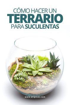 How to make a succulent terrarium step by step. Terrariums for succulents. DIY with succulents. Cactus House Plants, House Plants Decor, Cactus Decor, Plant Decor, Indoor Cactus, Cactus Art, Cactus Flower, Suculentas Diy, Cactus Y Suculentas
