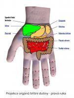 Projekce orgánů dutiny břišní - pravá ruka