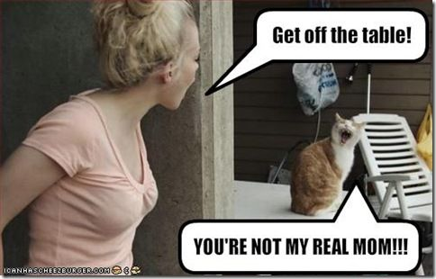 meowRealmom, Funny Cat, Make Me Laugh, Funny Stuff, Humor, Real Mom, So Funny, Kitty, Giggles