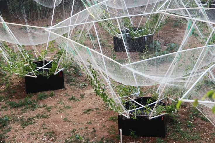 Gallery Of Sky Farm Vrap 3 Plants Farm Garden