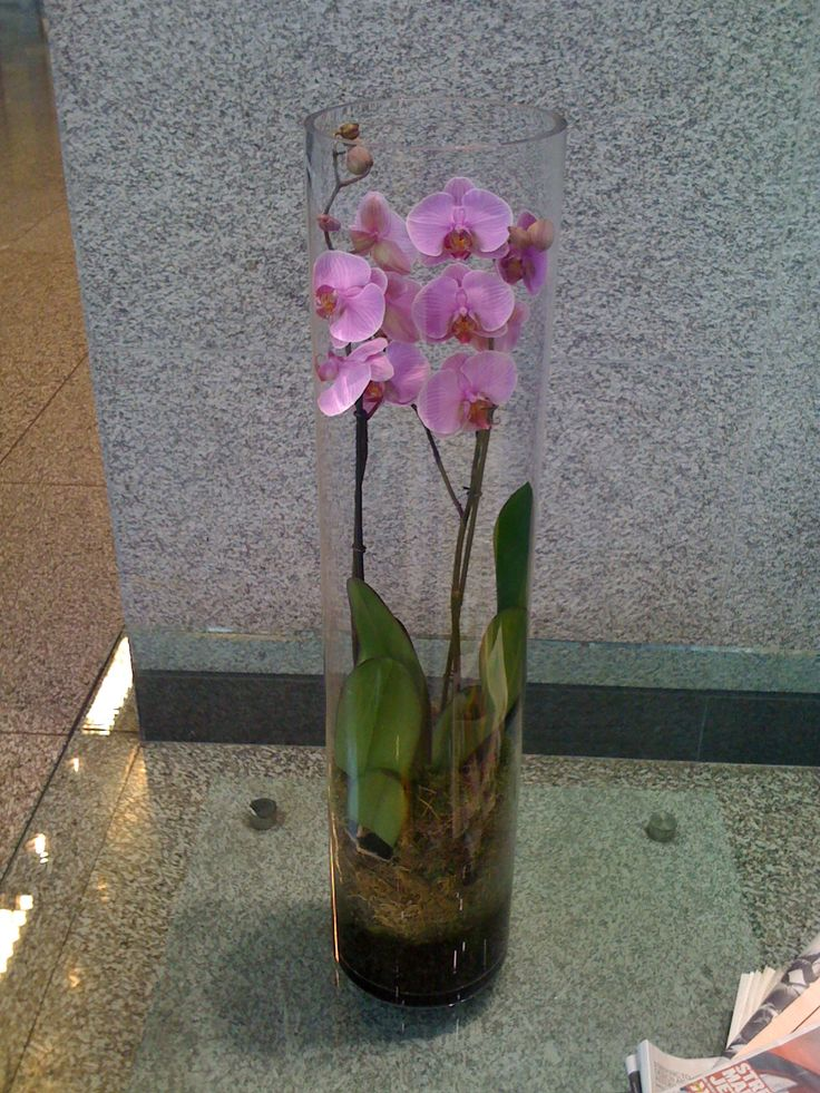 how to keep orchid in vase