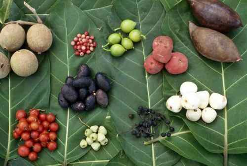 http://www.realaustraliatravel.com/bush-tucker.html Key plants, fruits and nuts used by the Aboriginals