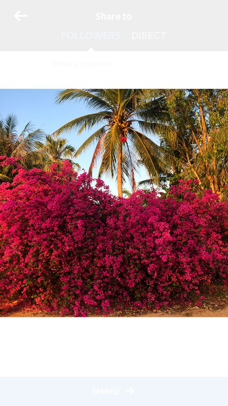The colours of Broome!