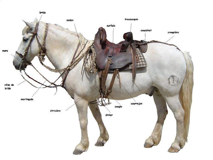les 89 meilleures images du tableau partit du corps du cheval dentition et posture du cavalier. Black Bedroom Furniture Sets. Home Design Ideas