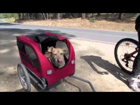 Como Adiestrar Fácil a Tu Perro: Remolques Bici para Perros: Carros Bicicleta Para Perros