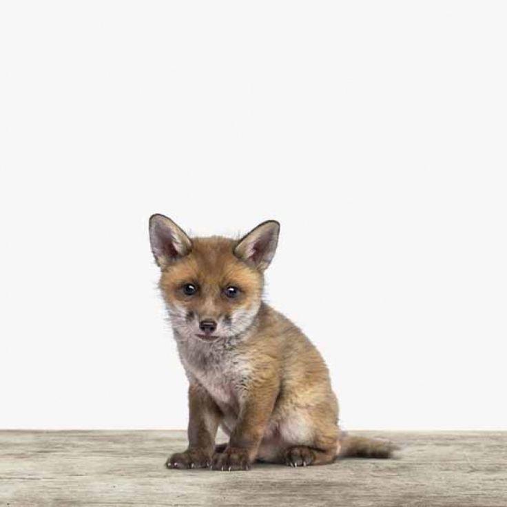 Der kleine Fuchs beobachtet aufmerksam, aber schüchtern die Welt. Dein ArtyAnimal?