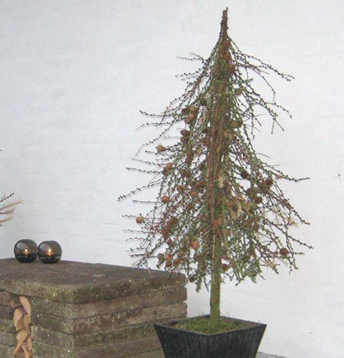 Vintertræ til terrassen