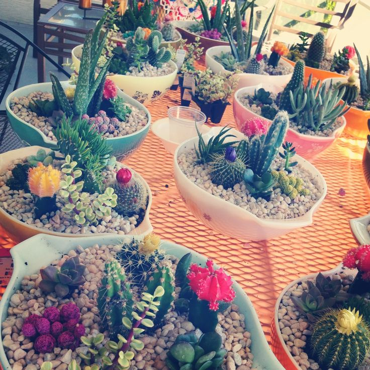 DIY Cacti Centerpieces; maybe for a desert wedding