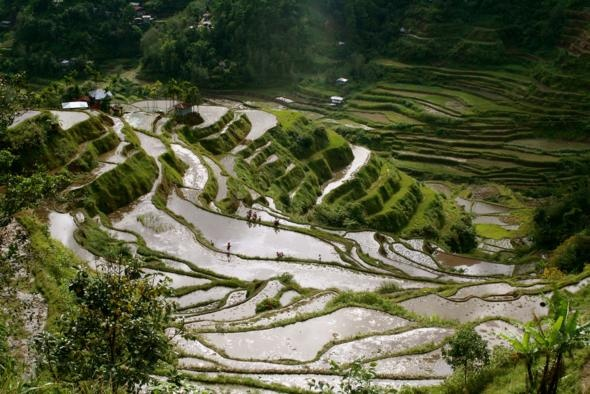 Banaue Rice Terraces, Philippines: Natural Wonder, Photos Galleries, Favorite Places, Rice Me, Hands, Beautiful Places, Rice Terraces, Travel, Philippines