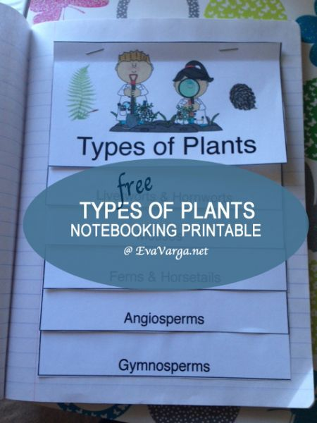Free minibook on types of plants  #homeschool #ihsnet